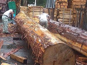 木曽檜をはじめ、木曽谷の木々は約2倍の年月をかけて、一人前になります