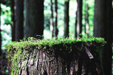 木の基礎知識