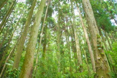 日本の家に最適な国産無垢材