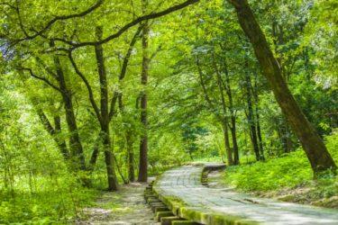 天然素材の木の家は、シックハウス症候群を防ぎます